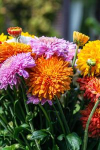 Die Möglichkeit, Blumen zum Muttertag zu verschicken, wird immer häufiger wahrgenommen. Einen Blumenstrauß kann man auchprima online bestellen.