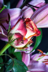 Rosen und Lilien zum Muttertag